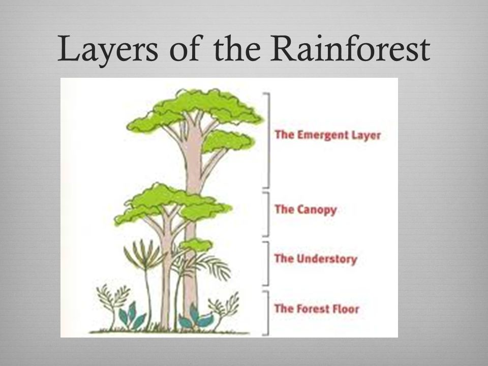 What is a Rainforest: http://www.youtube.com/watch?v=OS2VrgRFCzc&feature=related