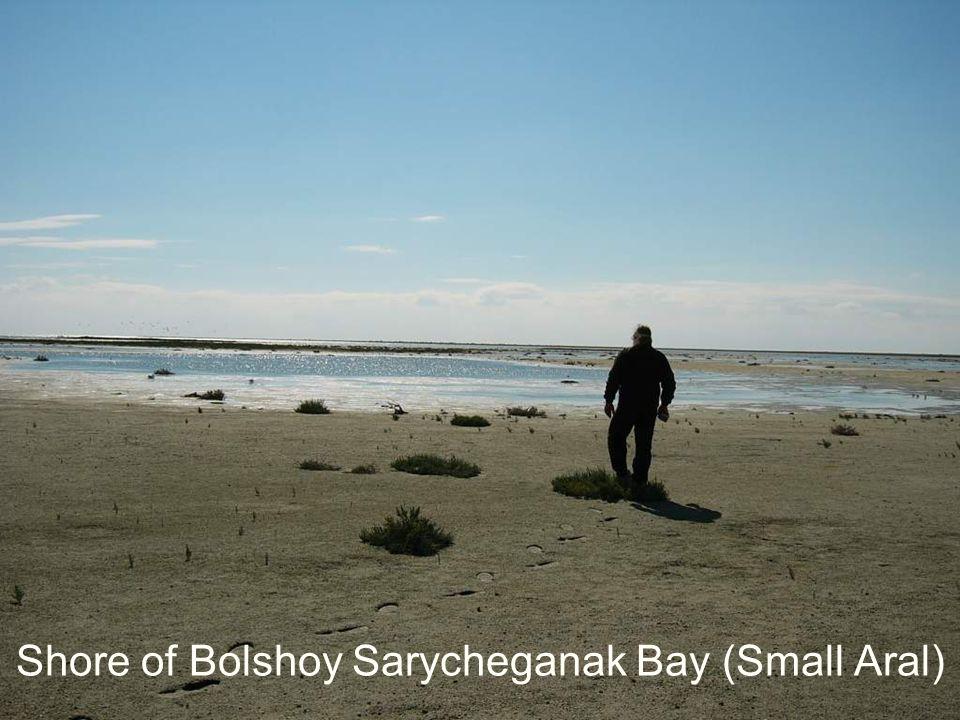 Shore of Bolshoy Sarycheganak Bay (Small Aral)