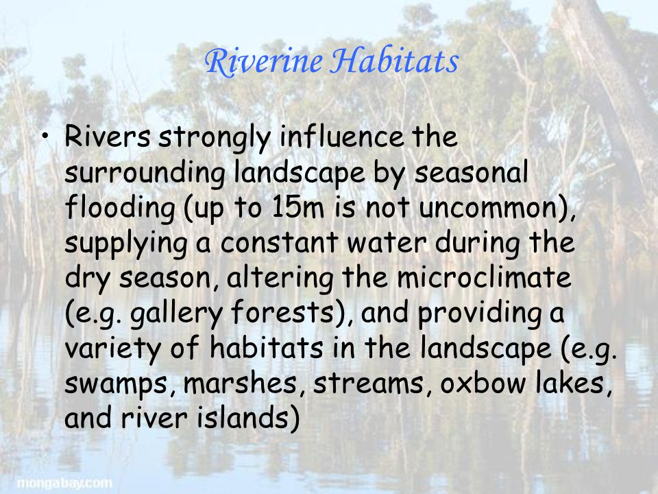 Riverine Habitats Rivers strongly influence the surrounding landscape by seasonal flooding (up to 15m is not uncommon), supplying a constant water during the dry season, altering the microclimate (e.g.