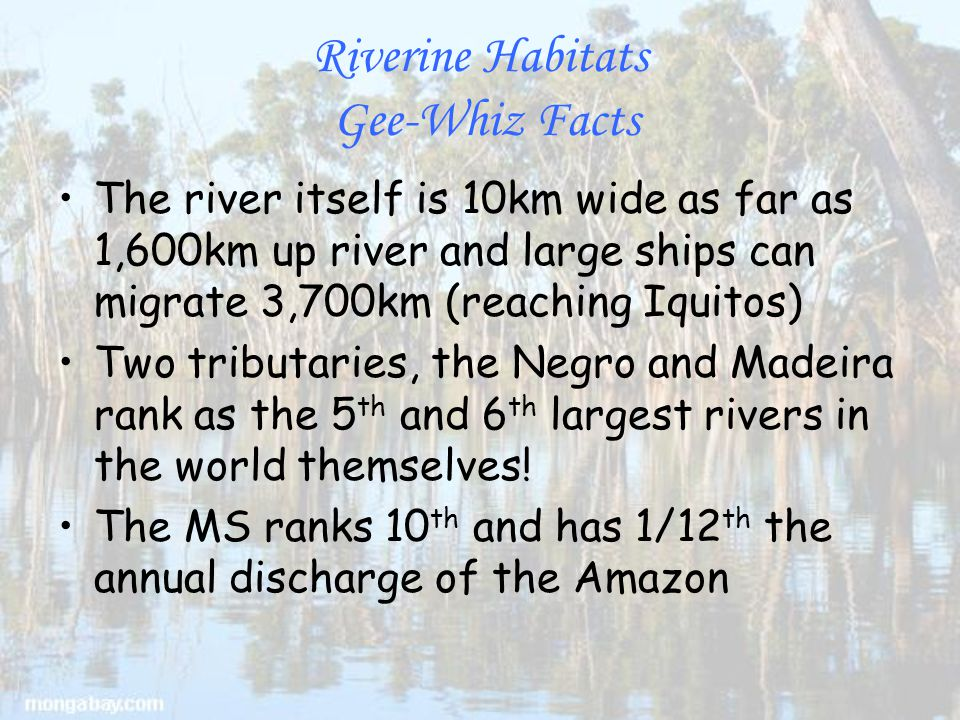 Riverine Habitats Gee-Whiz Facts The river itself is 10km wide as far as 1,600km up river and large ships can migrate 3,700km (reaching Iquitos) Two tributaries, the Negro and Madeira rank as the 5 th and 6 th largest rivers in the world themselves.