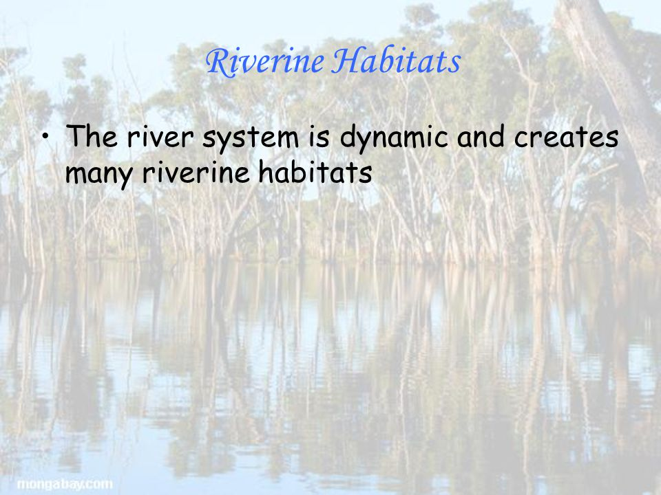Riverine Habitats The river system is dynamic and creates many riverine habitats