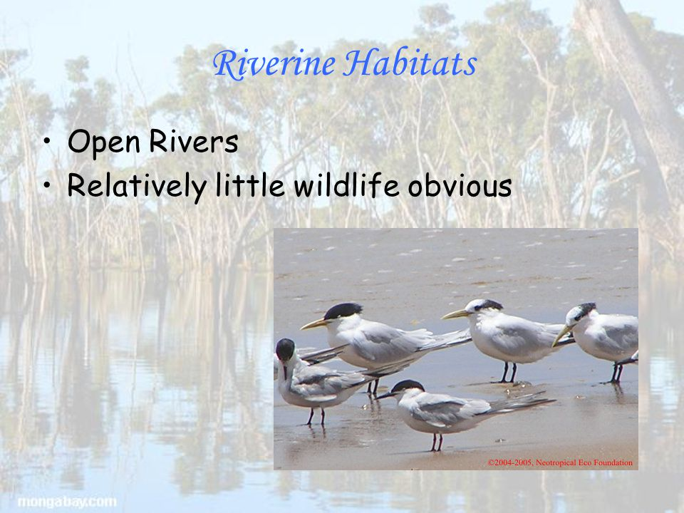 Riverine Habitats Open Rivers Relatively little wildlife obvious