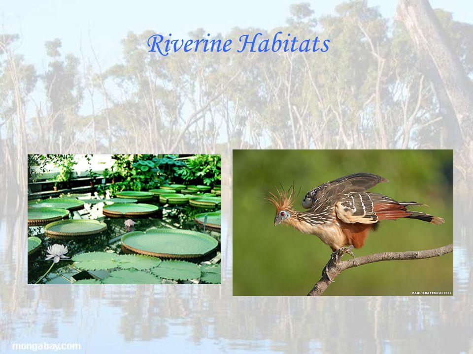Riverine Habitats