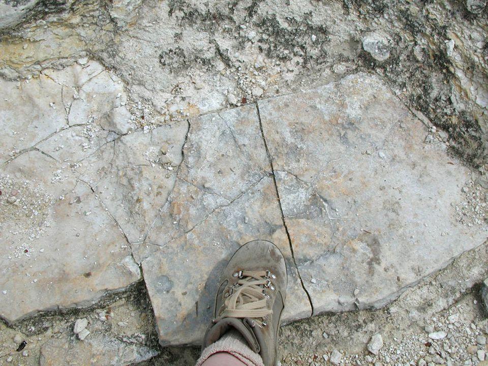 Image 65 - Desiccation cracks