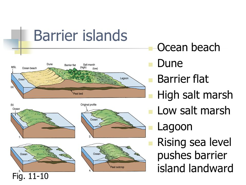 Barrier islands Ocean beach Dune Barrier flat High salt marsh Low salt marsh Lagoon Rising sea level pushes barrier island landward Fig.