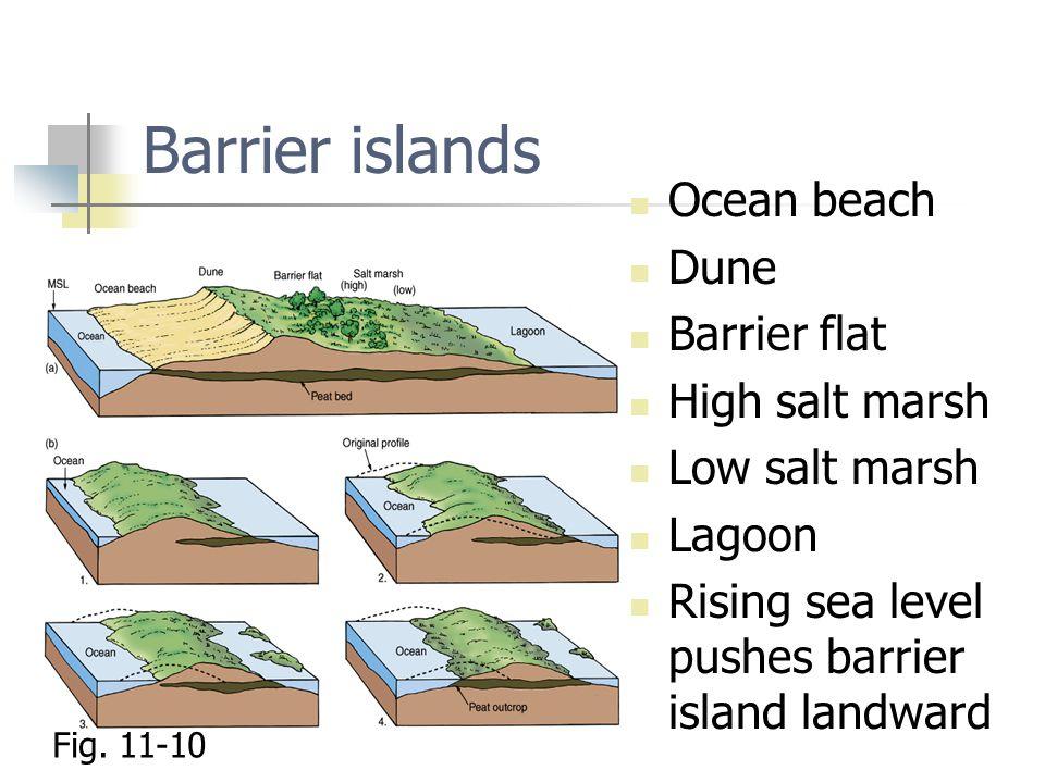 Barrier islands Ocean beach Dune Barrier flat High salt marsh Low salt marsh Lagoon Rising sea level pushes barrier island landward Fig. 11-10