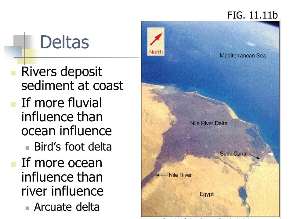 Deltas Rivers deposit sediment at coast If more fluvial influence than ocean influence Bird's foot delta If more ocean influence than river influence Arcuate delta FIG.