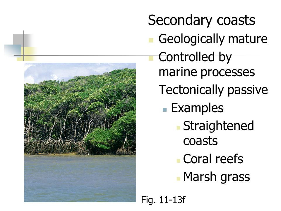 Secondary coasts Geologically mature Controlled by marine processes Tectonically passive Examples Straightened coasts Coral reefs Marsh grass Fig.