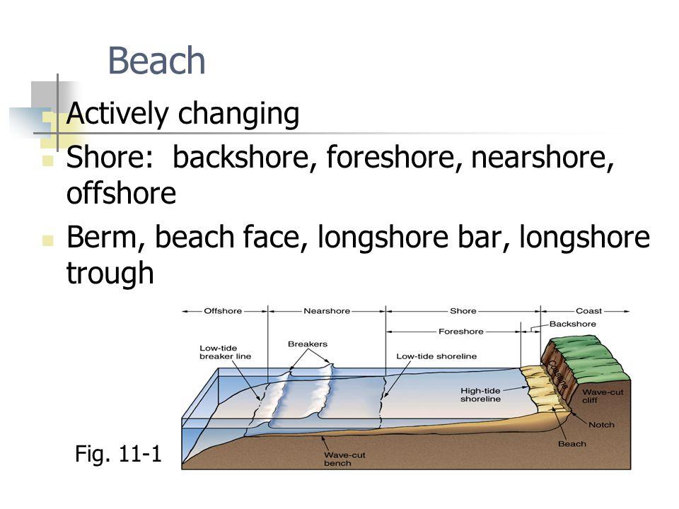 Beach Actively changing Shore: backshore, foreshore, nearshore, offshore Berm, beach face, longshore bar, longshore trough Fig. 11-1