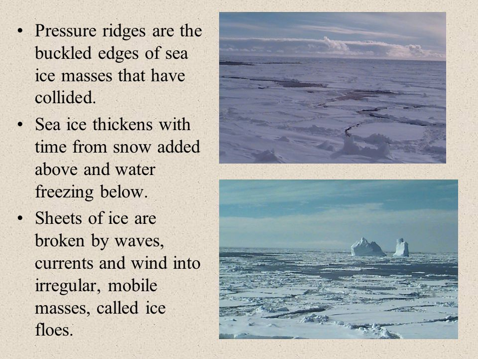 Pressure ridges are the buckled edges of sea ice masses that have collided.