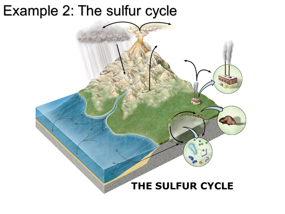 THE SULFUR CYCLE Example 2: The sulfur cycle