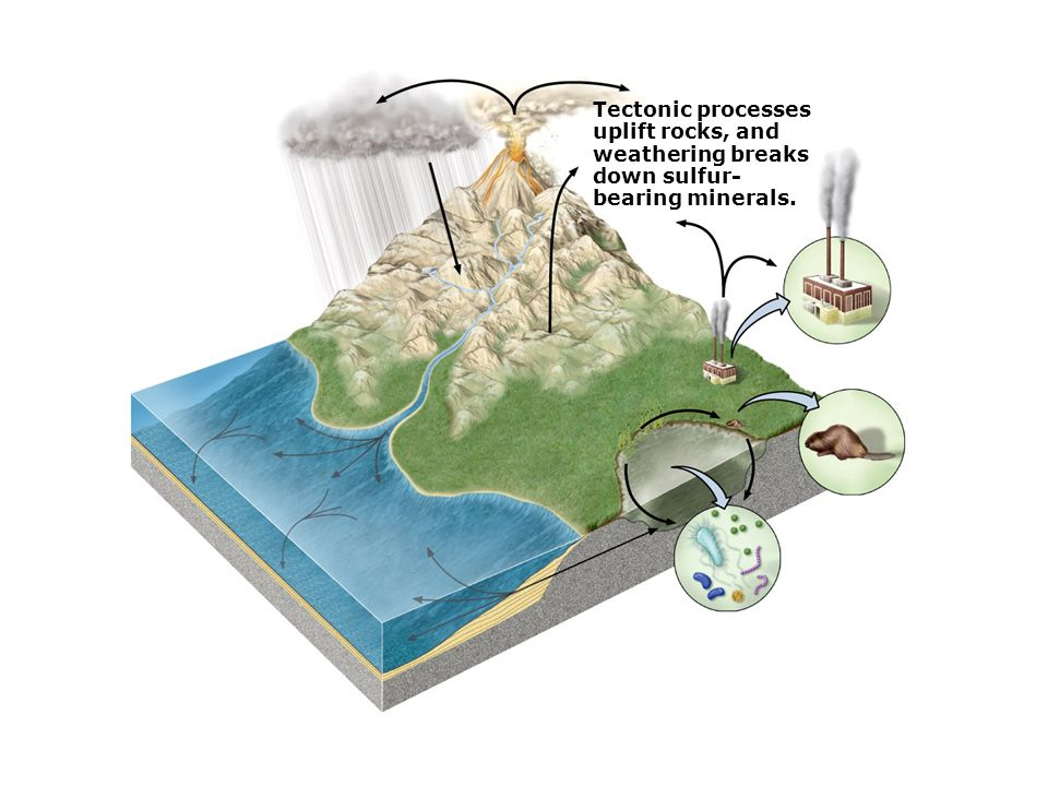 Tectonic processes uplift rocks, and weathering breaks down sulfur- bearing minerals.
