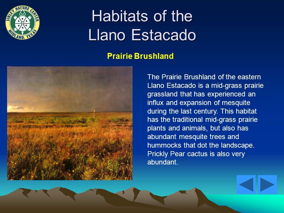 Habitats of the Llano Estacado Prairie Brushland The Prairie Brushland of the eastern Llano Estacado is a mid-grass prairie grassland that has experienced an influx and expansion of mesquite during the last century.