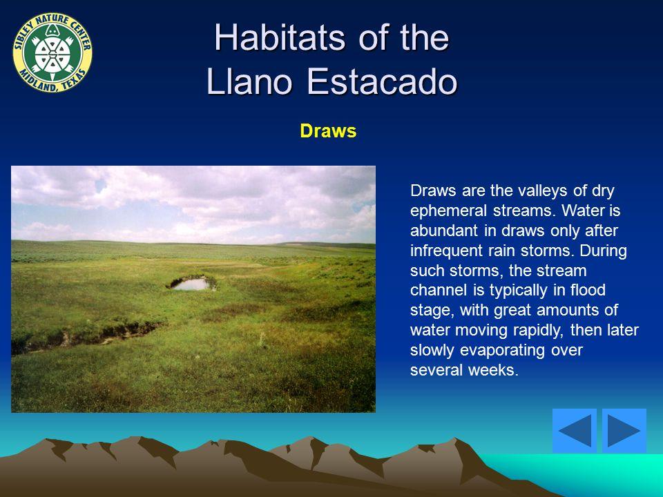 Habitats of the Llano Estacado Draws Draws are the valleys of dry ephemeral streams.