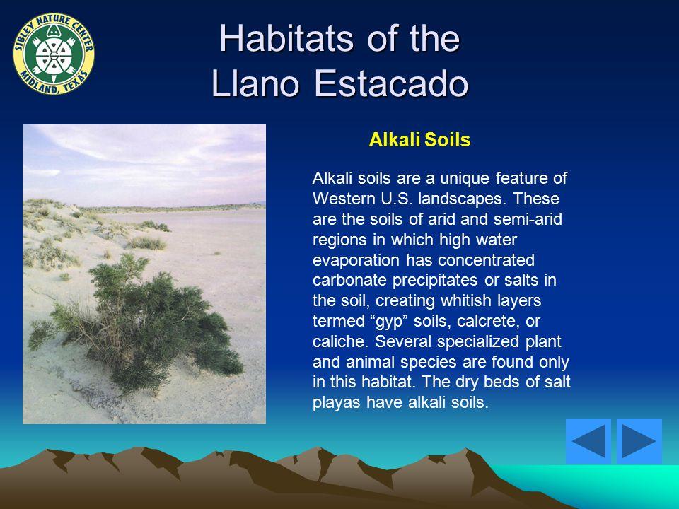 Habitats of the Llano Estacado Alkali Soils Alkali soils are a unique feature of Western U.S.