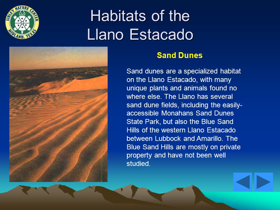 Habitats of the Llano Estacado Sand Dunes Sand dunes are a specialized habitat on the Llano Estacado, with many unique plants and animals found no where else.