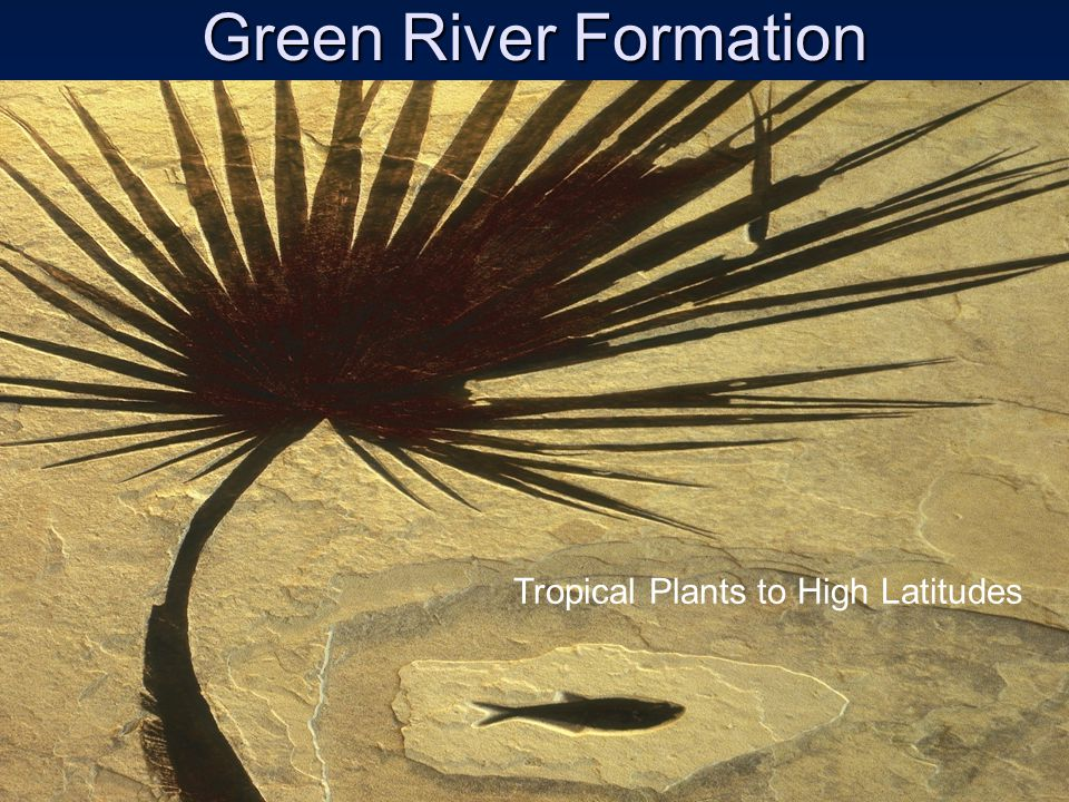 Green River Formation Tropical Plants to High Latitudes
