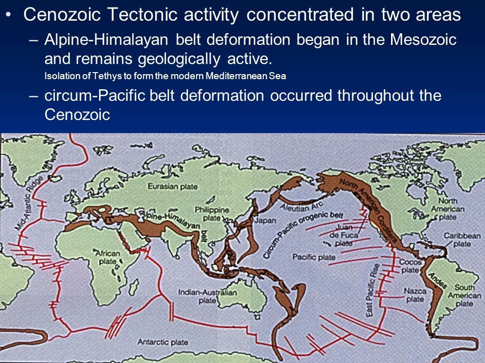 Cenozoic Tectonic activity concentrated in two areas –Alpine-Himalayan belt deformation began in the Mesozoic and remains geologically active.