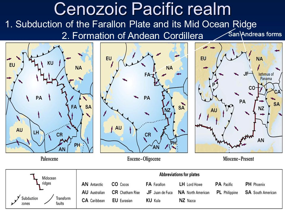 Cenozoic Pacific realm 1.Subduction of the Farallon Plate and its Mid Ocean Ridge 2.