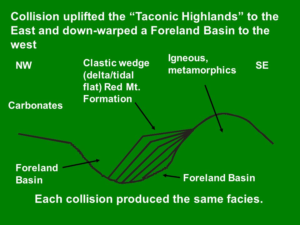 Collision uplifted the Taconic Highlands to the East and down-warped a Foreland Basin to the west NWSE Clastic wedge (delta/tidal flat) Red Mt.
