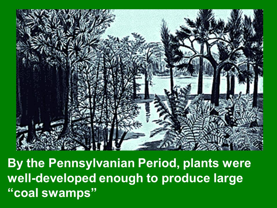 By the Pennsylvanian Period, plants were well-developed enough to produce large coal swamps