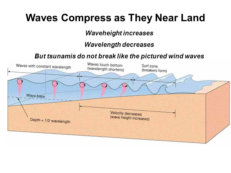 Waves Compress as They Near Land Waveheight increases Wavelength decreases But tsunamis do not break like the pictured wind waves