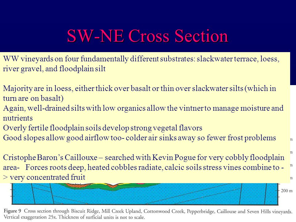 SW-NE Cross Section WW vineyards on four fundamentally different substrates: slackwater terrace, loess, river gravel, and floodplain silt Majority are in loess, either thick over basalt or thin over slackwater silts (which in turn are on basalt) Again, well-drained silts with low organics allow the vintner to manage moisture and nutrients Overly fertile floodplain soils develop strong vegetal flavors Good slopes allow good airflow too- colder air sinks away so fewer frost problems Cristophe Baron's Caillouxe – searched with Kevin Pogue for very cobbly floodplain area- Forces roots deep, heated cobbles radiate, calcic soils stress vines combine to - > very concentrated fruit