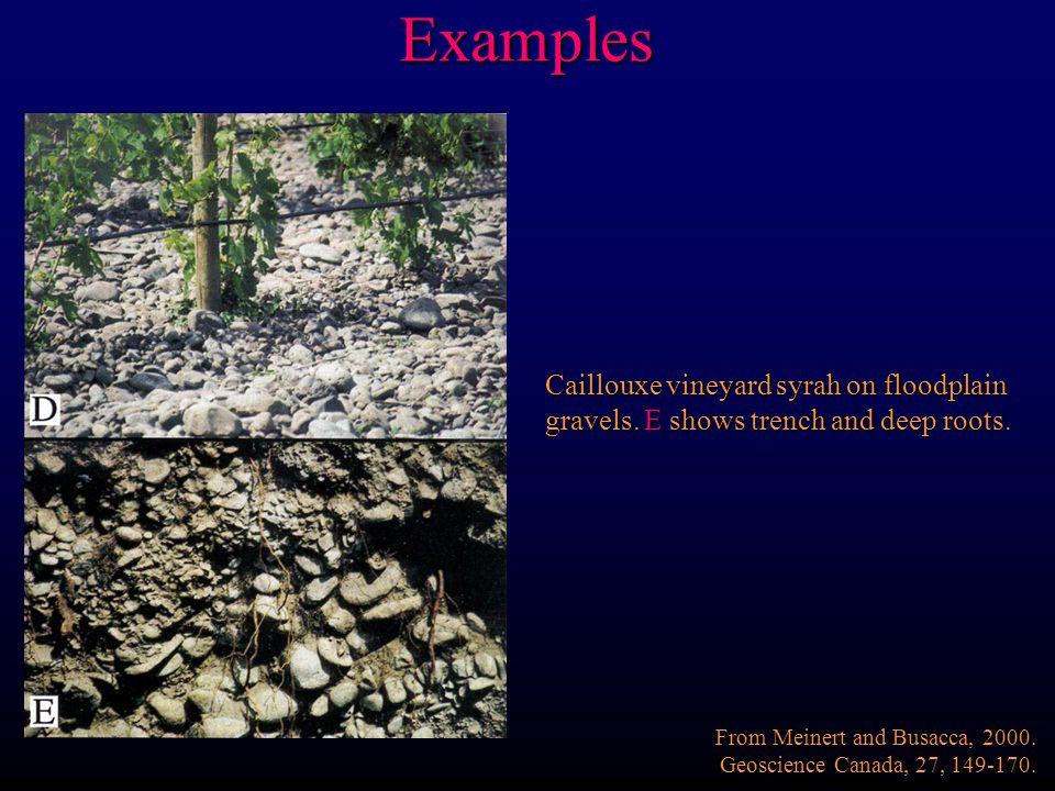 Examples Caillouxe vineyard syrah on floodplain gravels.
