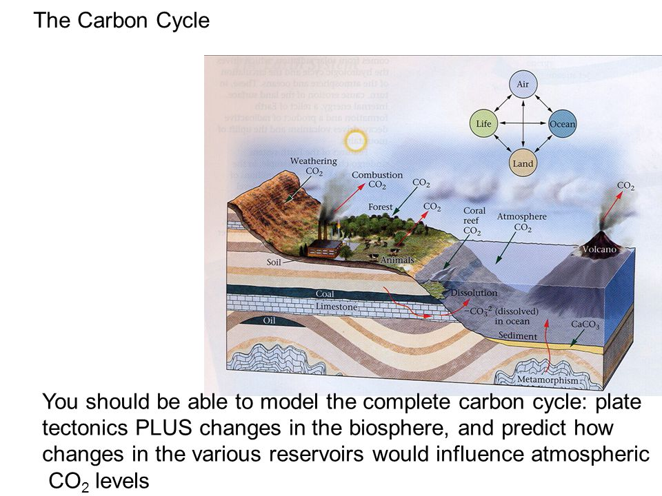 The Carbon Cycle You should be able to model the complete carbon cycle: plate tectonics PLUS changes in the biosphere, and predict how changes in the various reservoirs would influence atmospheric CO 2 levels