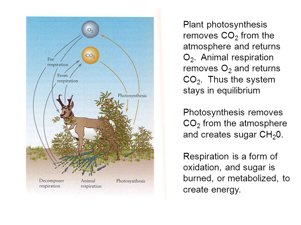 Plant photosynthesis removes CO 2 from the atmosphere and returns O 2.