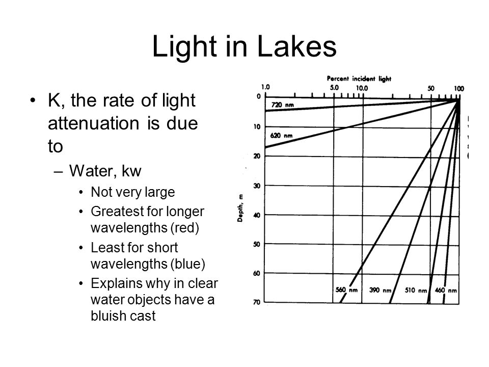 Light in Lakes K, the rate of light attenuation is due to –Water, kw Not very large Greatest for longer wavelengths (red) Least for short wavelengths (blue) Explains why in clear water objects have a bluish cast