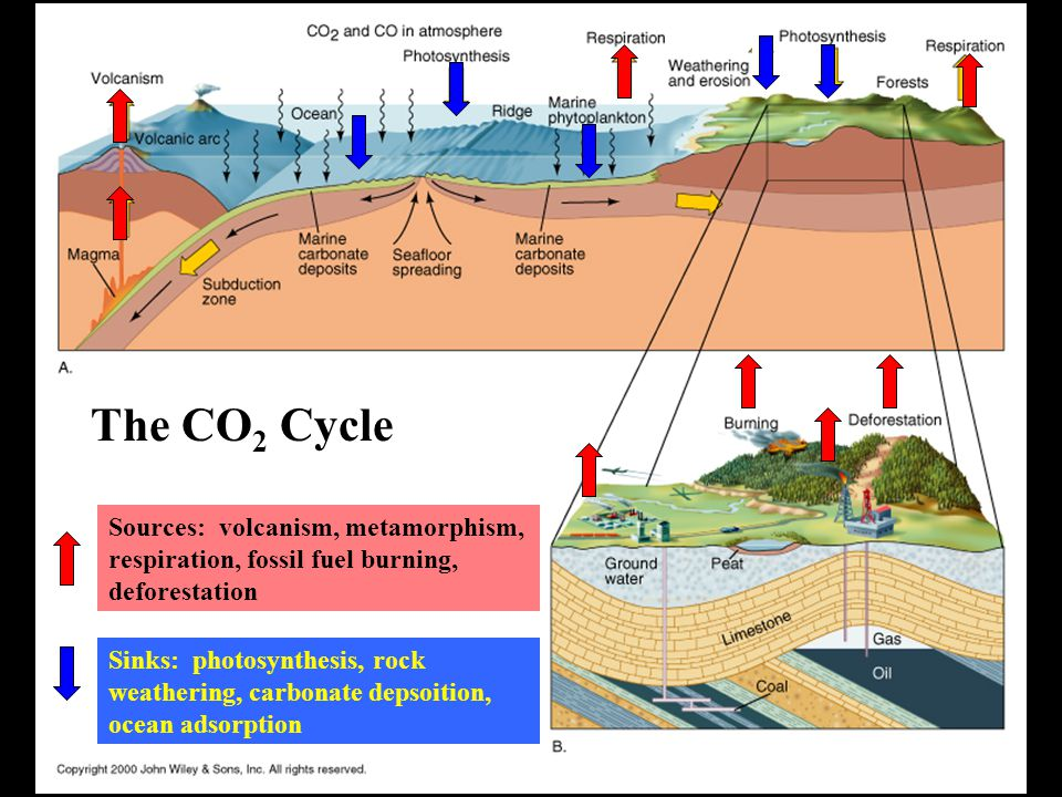 The CO 2 Cycle Sources: volcanism, metamorphism, respiration, fossil fuel burning, deforestation Sinks: photosynthesis, rock weathering, carbonate depsoition, ocean adsorption