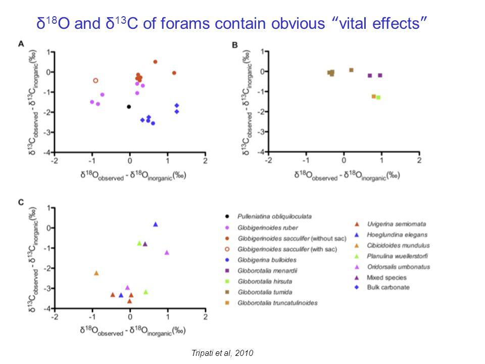 δ 18 O and δ 13 C of forams contain obvious vital effects Tripati et al, 2010