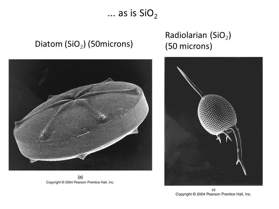 ... as is SiO 2 Diatom (SiO 2 ) (50microns) Radiolarian (SiO 2 ) (50 microns)