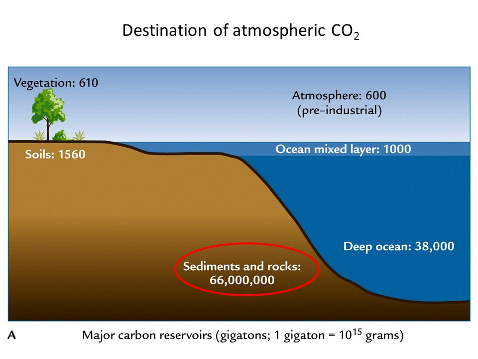 Inorganic carbon cycle Carbon ends up here