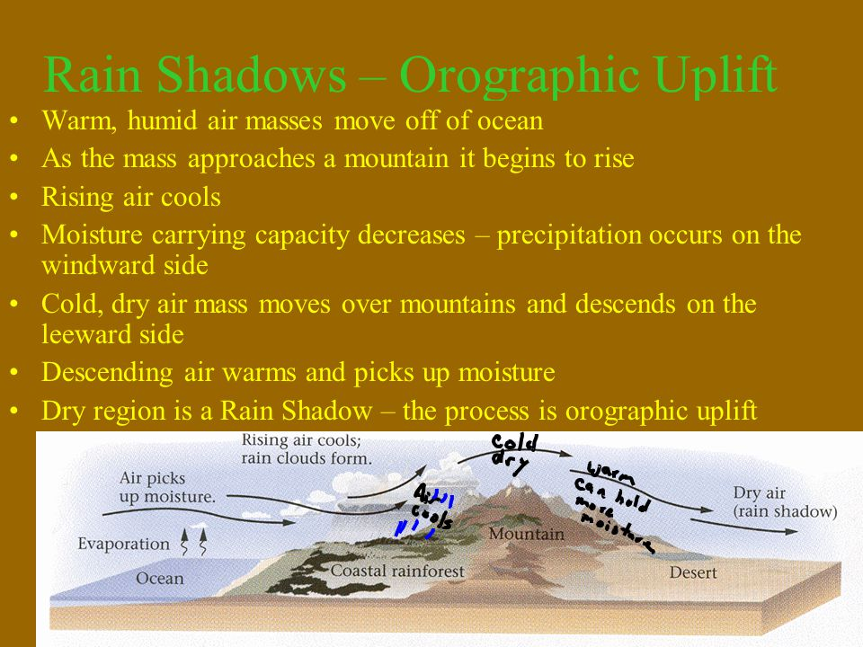 Rain Shadows – Orographic Uplift Warm, humid air masses move off of ocean As the mass approaches a mountain it begins to rise Rising air cools Moistur