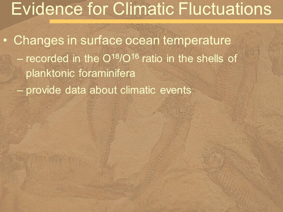 Changes in surface ocean temperature –recorded in the O 18 /O 16 ratio in the shells of planktonic foraminifera –provide data about climatic events Evidence for Climatic Fluctuations