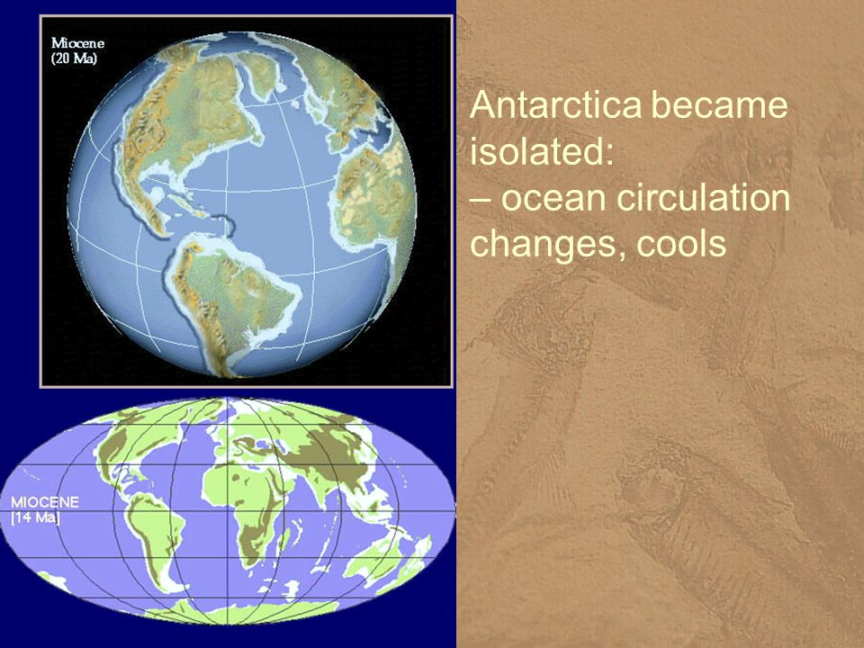 Antarctica became isolated: – ocean circulation changes, cools