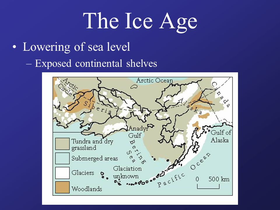 The Ice Age Lowering of sea level –Exposed continental shelves