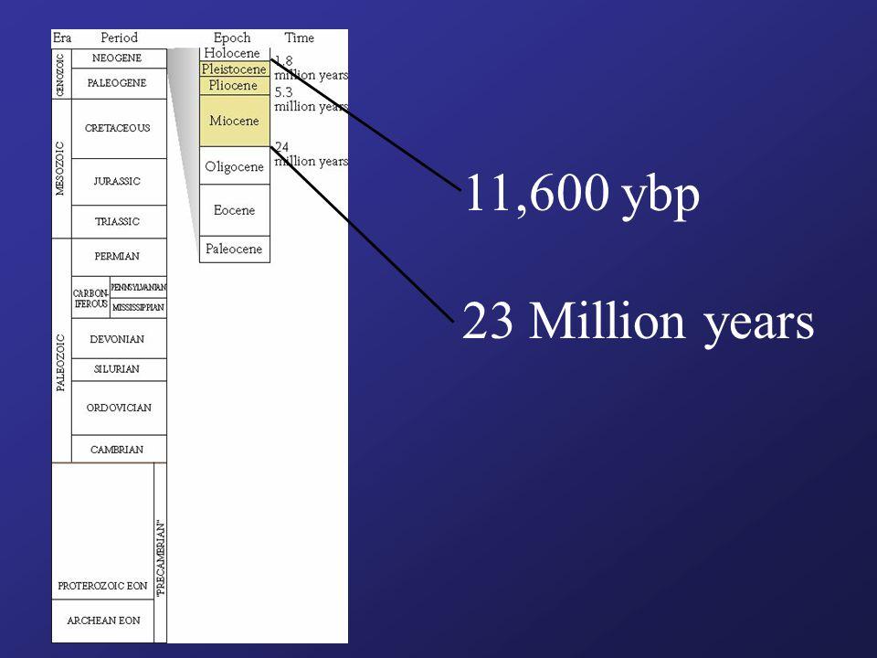 11,600 ybp 23 Million years