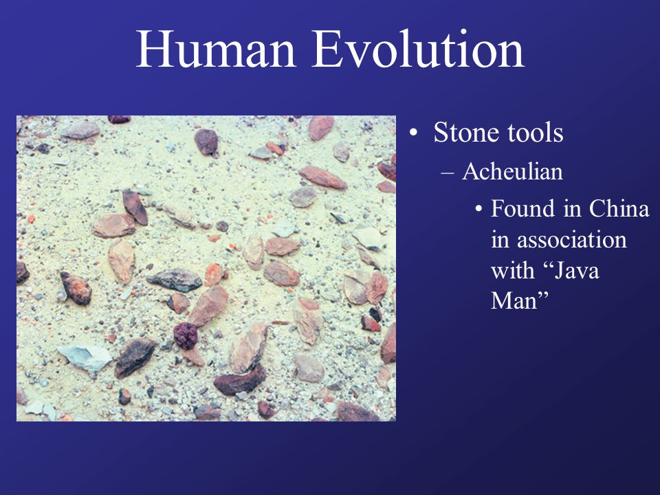 "Human Evolution Stone tools –Acheulian Found in China in association with ""Java Man"""