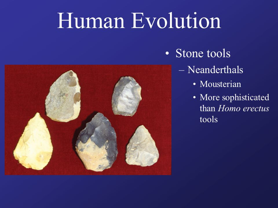 Human Evolution Stone tools –Neanderthals Mousterian More sophisticated than Homo erectus tools