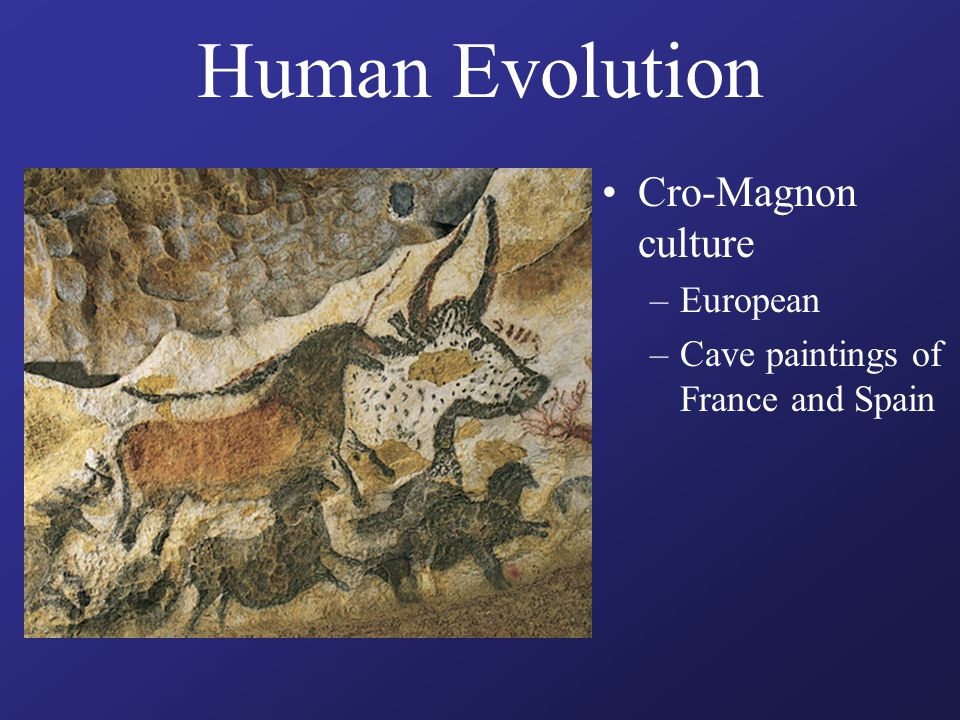 Human Evolution Cro-Magnon culture –European –Cave paintings of France and Spain