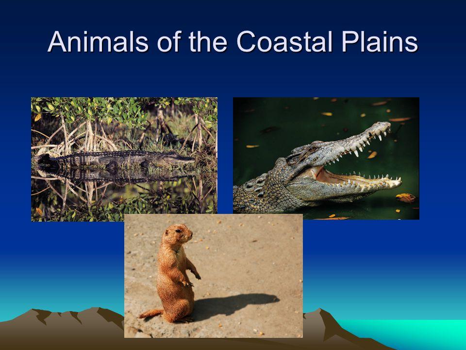 Coastal Animals…. Many kinds of animals live in the coastal region… To name a few… –Quail –Hawks –Owls –Hundreds of other birds –Bald eagle –White tai