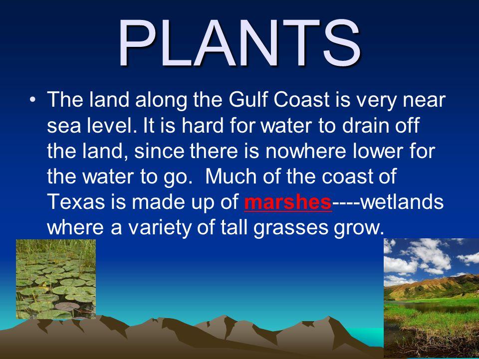Animals of the Coastal Plains