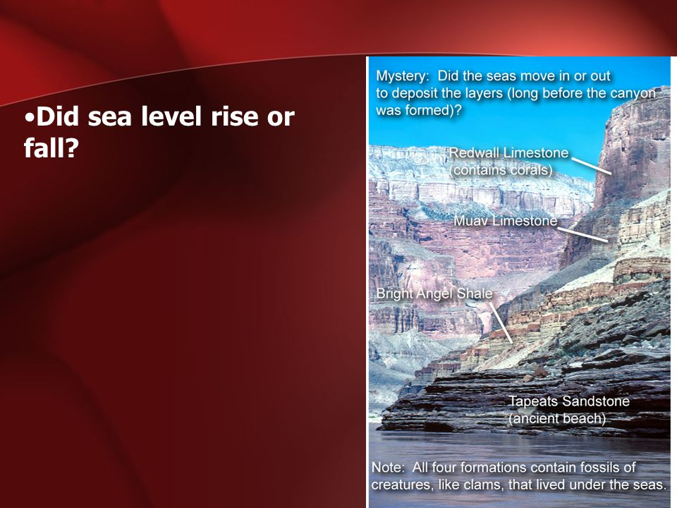Did sea level rise or fall?