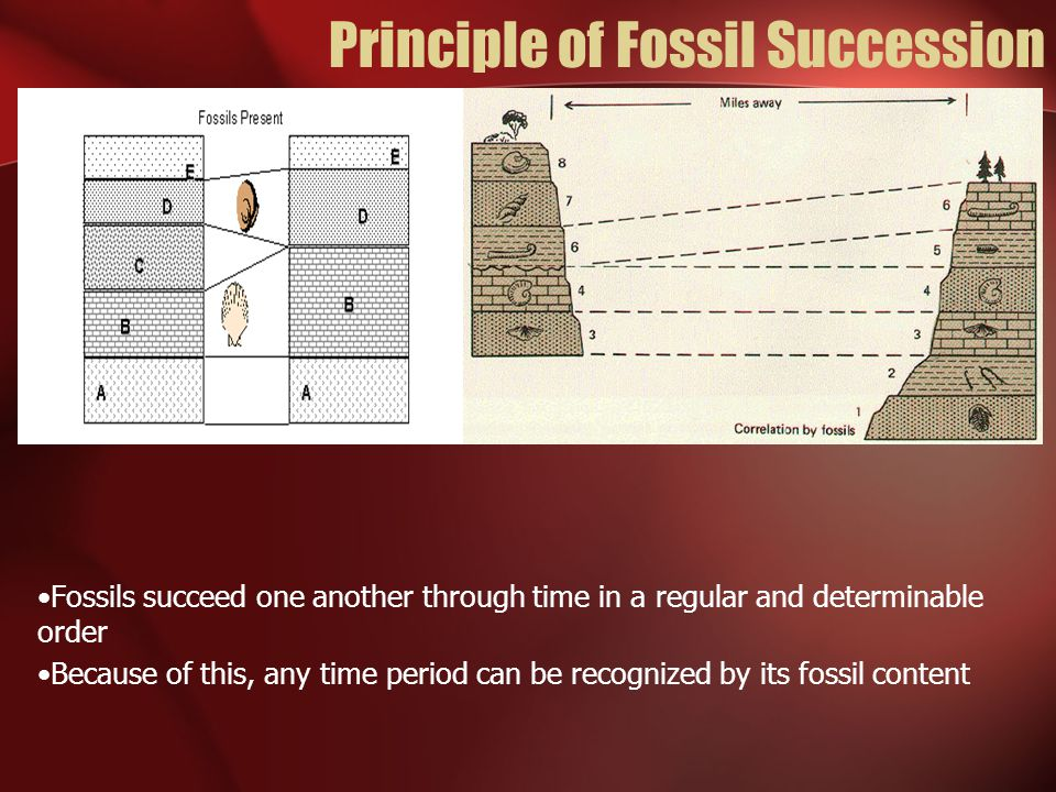 Principle of Fossil Succession Fossils succeed one another through time in a regular and determinable order Because of this, any time period can be re