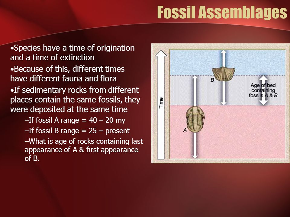 Fossil Assemblages Species have a time of origination and a time of extinction Because of this, different times have different fauna and flora If sedi