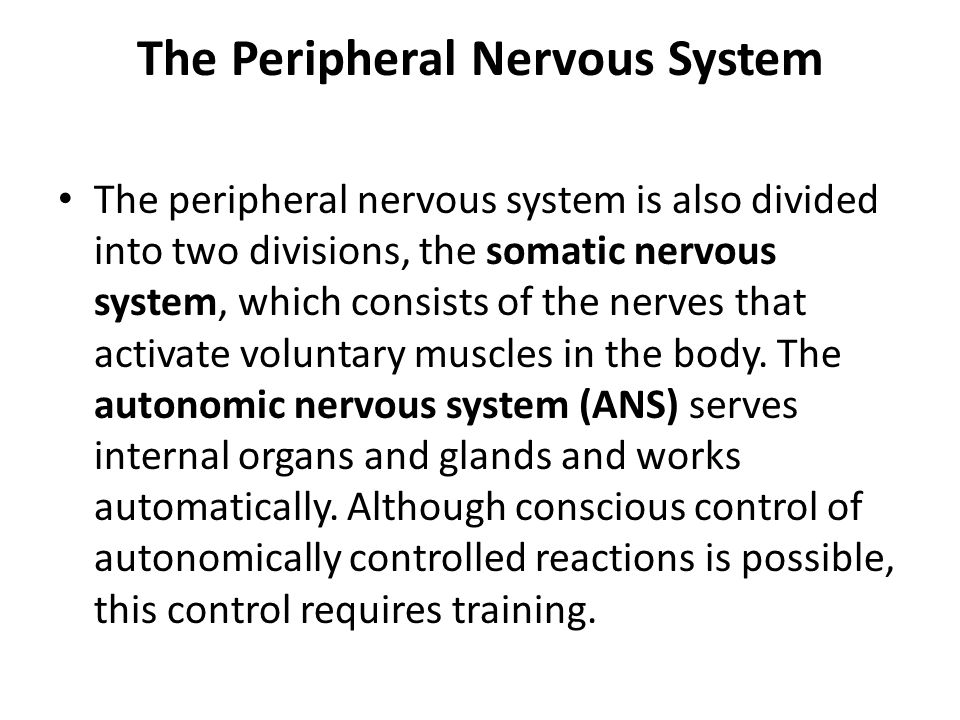 The Peripheral Nervous System The peripheral nervous system is also divided into two divisions, the somatic nervous system, which consists of the nerv
