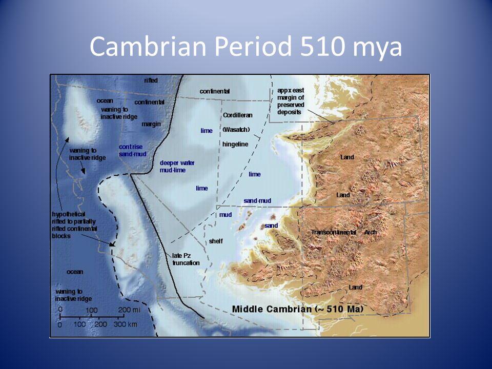 Cambrian Period 510 mya